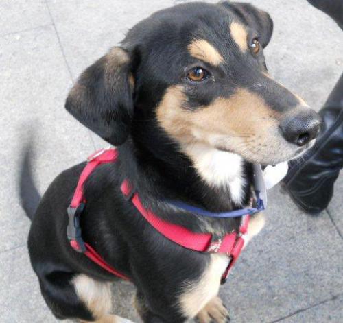 Lotus cachorrete de 4 meses busca hogar. Valencia. A_5751341184987